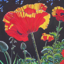 fb-sunlit-poppies-copy-2